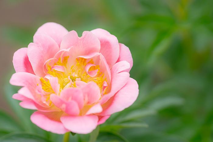 令和元年お祝いムードいっぱいの日比谷花壇大船フラワーセンター_b0145398_23040291.jpg
