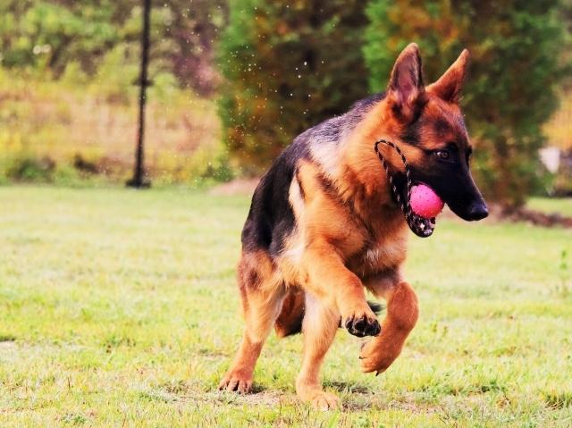躍動する子犬_d0360206_00205192.jpg