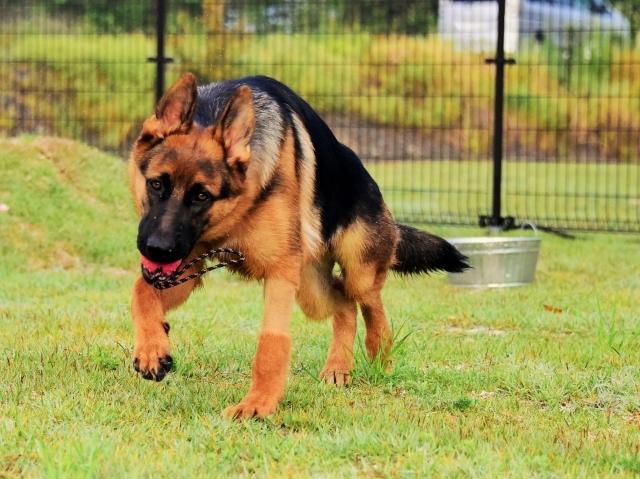 躍動する子犬_d0360206_00205236.jpg