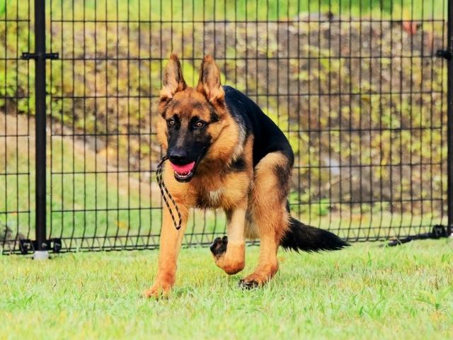 躍動する子犬_d0360206_00205252.jpg