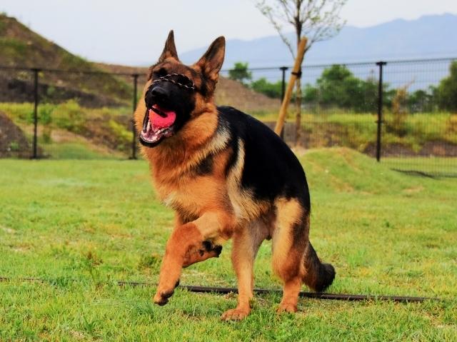 躍動する子犬_d0360206_00205270.jpg