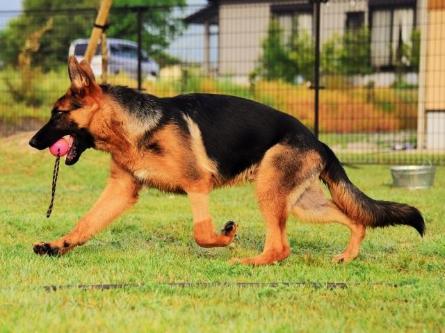 躍動する子犬_d0360206_00205640.jpg
