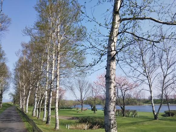 桜とエゾエンゴサク、木蓮?こぶし?_f0316507_21004468.jpg
