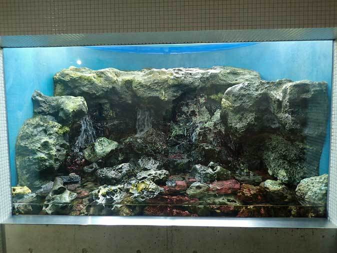 葛西臨海水族園:「小笠原の海2」~荒波に生きるものたち_b0355317_23065369.jpg