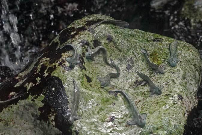 葛西臨海水族園:「小笠原の海2」~荒波に生きるものたち_b0355317_23170812.jpg