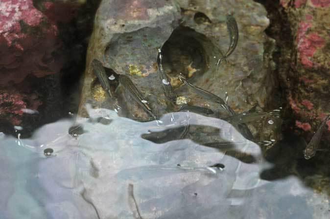 葛西臨海水族園:「小笠原の海2」~荒波に生きるものたち_b0355317_23205676.jpg