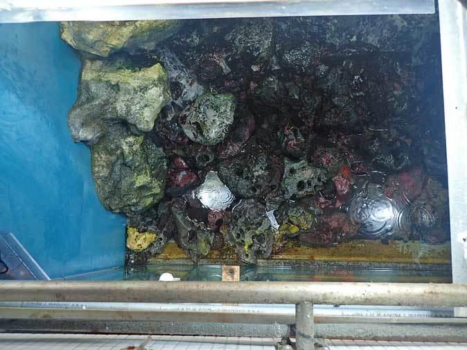 葛西臨海水族園:「小笠原の海2」~荒波に生きるものたち_b0355317_23275434.jpg