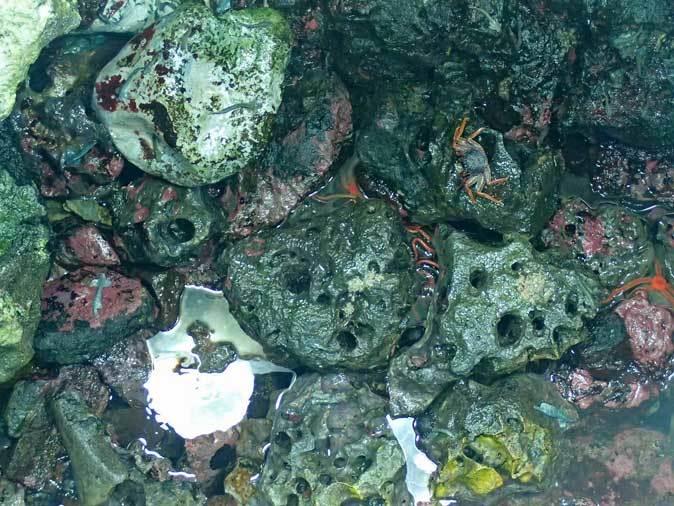葛西臨海水族園:「小笠原の海2」~荒波に生きるものたち_b0355317_23300965.jpg