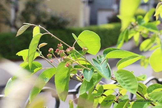 『NHK趣味の園芸』100均鉢植えプランターを漆喰風にリメイク(春の庭)_f0023333_22144704.jpg