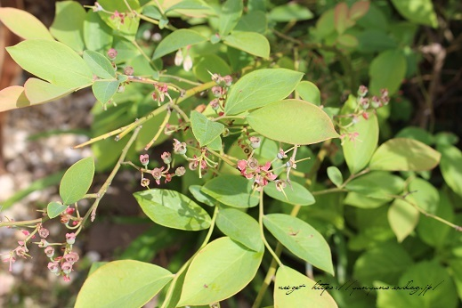 『NHK趣味の園芸』100均鉢植えプランターを漆喰風にリメイク(春の庭)_f0023333_22145072.jpg