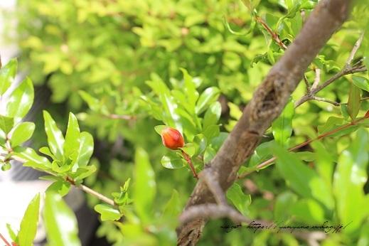 『NHK趣味の園芸』100均鉢植えプランターを漆喰風にリメイク(春の庭)_f0023333_22150394.jpg