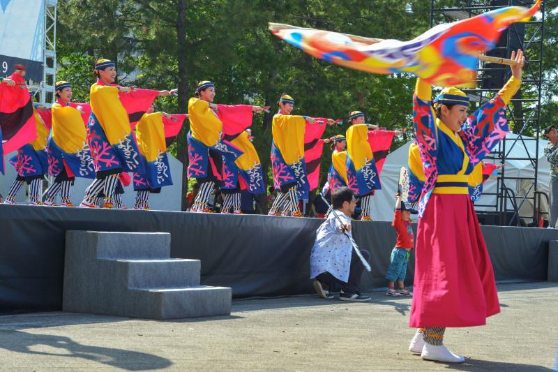 四国の祭り 2019 よさこいとらっく (ちふれ)_d0246136_23055071.jpg
