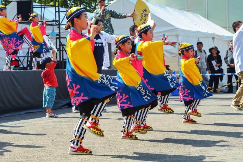 四国の祭り 2019 よさこいとらっく (ちふれ)_d0246136_23063210.jpg