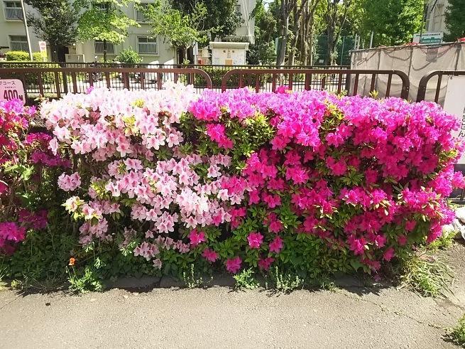新緑の季節_c0076939_00133105.jpg