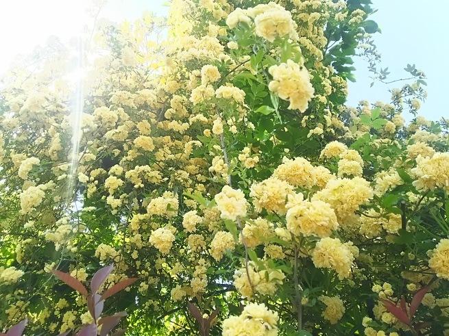 新緑の季節_c0076939_00143932.jpg