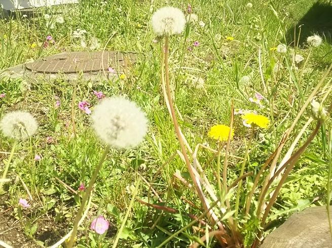 新緑の季節_c0076939_00160369.jpg
