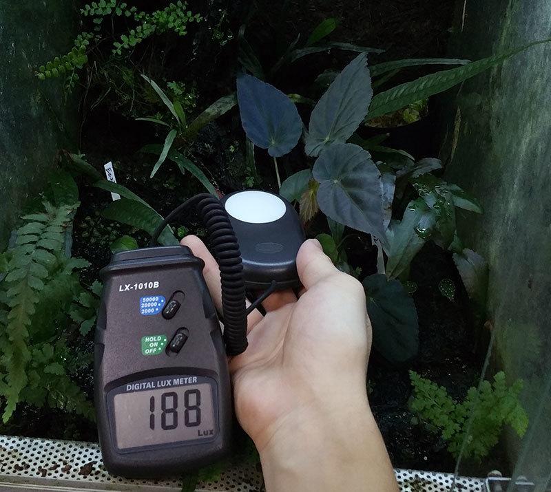 室内での植物育成、レイアウトケージの光、明るさについて パルダリウム、コケリウム_d0376039_01233322.jpg