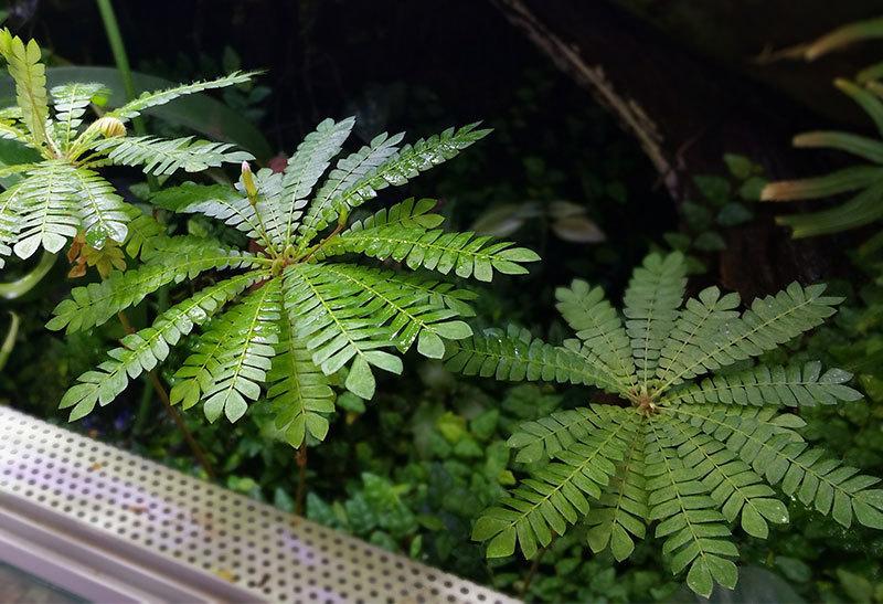室内での植物育成、レイアウトケージの光、明るさについて パルダリウム、コケリウム_d0376039_14574388.jpg