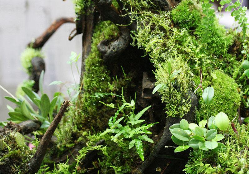 室内での植物育成、レイアウトケージの光、明るさについて パルダリウム、コケリウム_d0376039_17352457.jpg