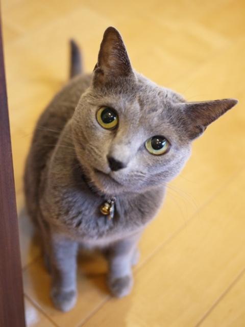 猫のお留守番 ビビちゃん編。_a0143140_22123998.jpg