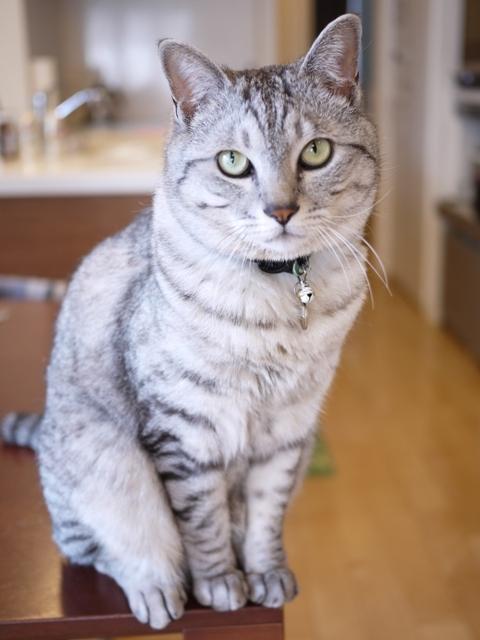 猫のお留守番 ぐらくん編。_a0143140_22184011.jpg
