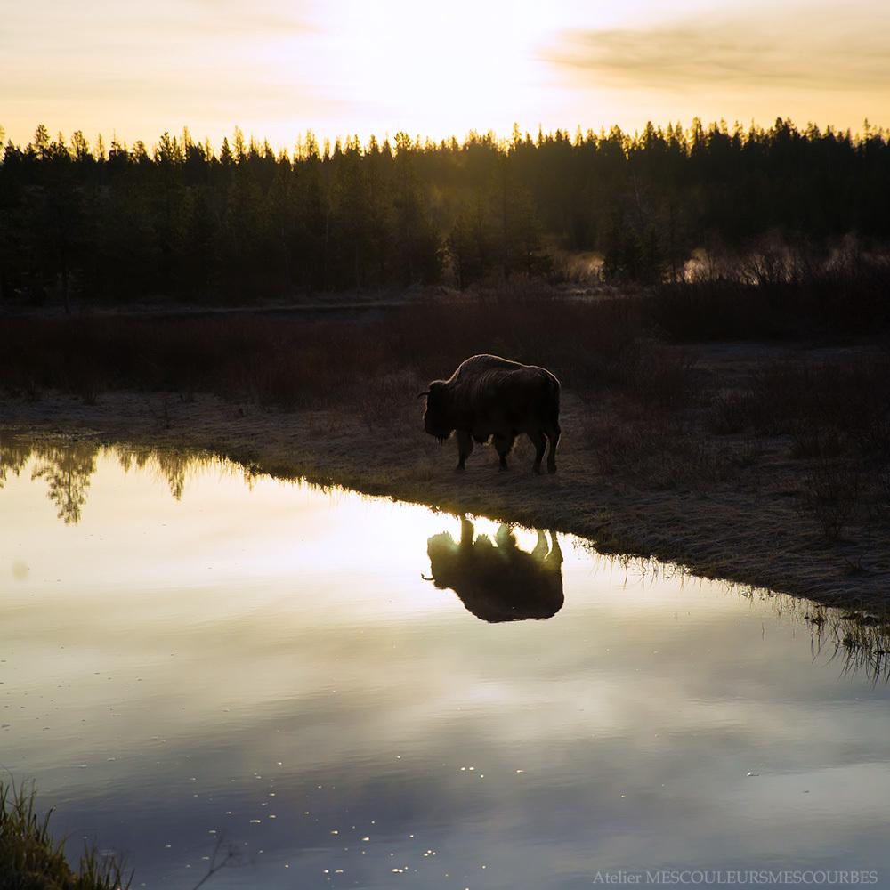 Wyoming_e0194450_19500446.jpg