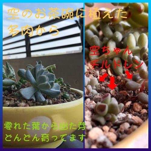 b0307951_22542419.jpg