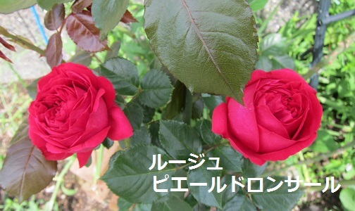 e0014154_17015786.jpg