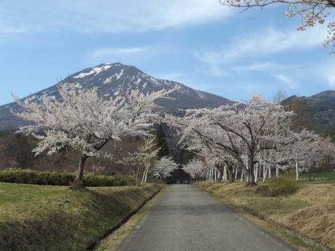 GW、桜満開、まだまだ見頃!_b0092858_10090850.jpg