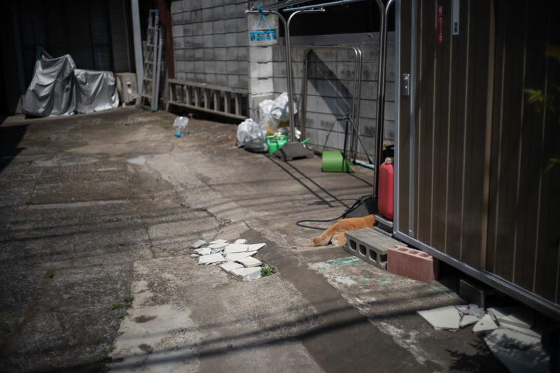2019/05/05 東へ(惨敗)_b0171364_15492158.jpg