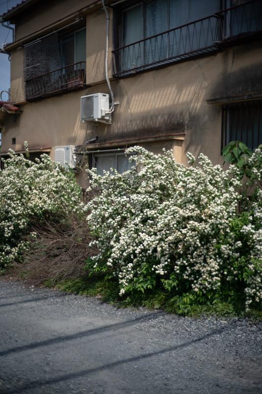 2019/05/05 東へ(惨敗)_b0171364_15492647.jpg