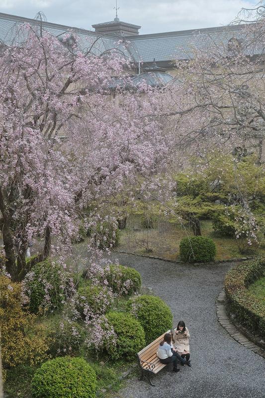 桜 2019_f0021869_21461364.jpg