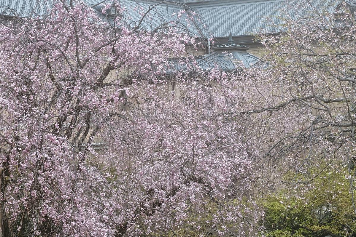 桜 2019_f0021869_21461374.jpg
