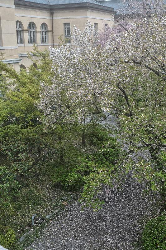 桜 2019_f0021869_21461406.jpg