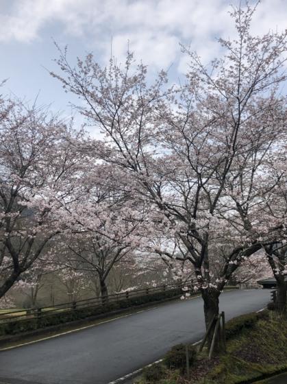 大原湖お泊り会_c0150273_15161847.jpeg