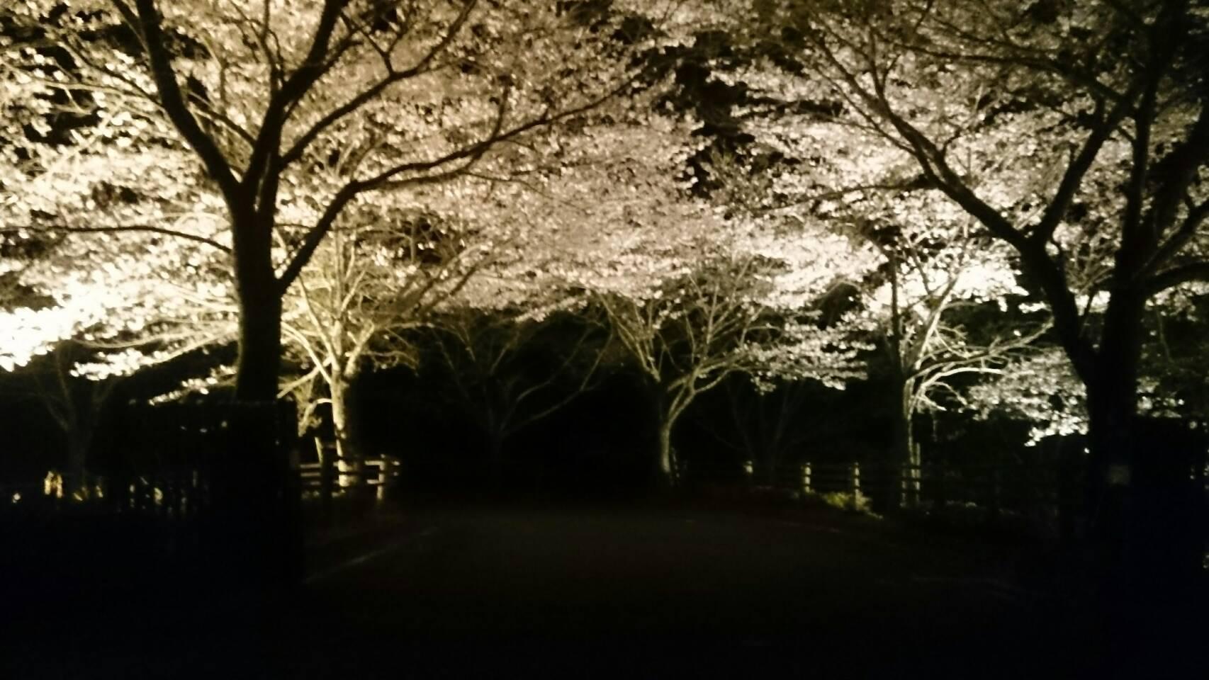 大原湖お泊り会_c0150273_15281588.jpeg