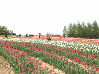 世羅チューリップ畑と大三島さんぽ_e0012580_19162765.jpg