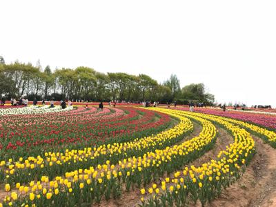 世羅チューリップ畑と大三島さんぽ_e0012580_19173116.jpg