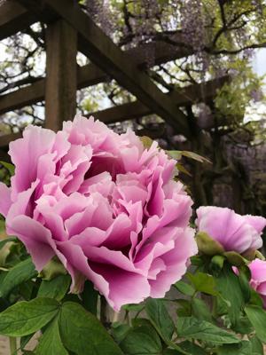 世羅チューリップ畑と大三島さんぽ_e0012580_19221290.jpg