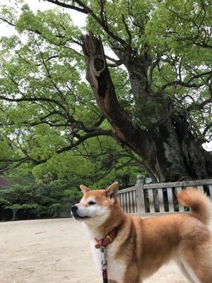 世羅チューリップ畑と大三島さんぽ_e0012580_19252569.jpg