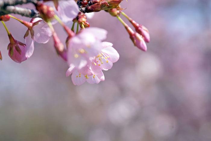 桜_d0162994_08293808.jpg