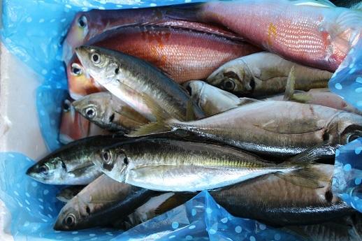 おいしい魚料理_a0333195_23081005.jpg
