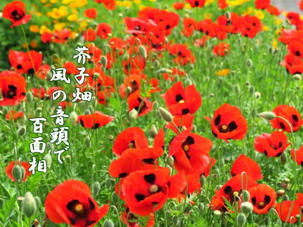 f0137096_22005261.jpg