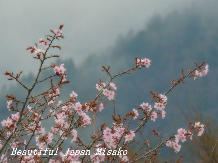 平成 最後の山桜・゚☆、・:`☆・・゚・゚☆。。_c0067206_20574835.jpg
