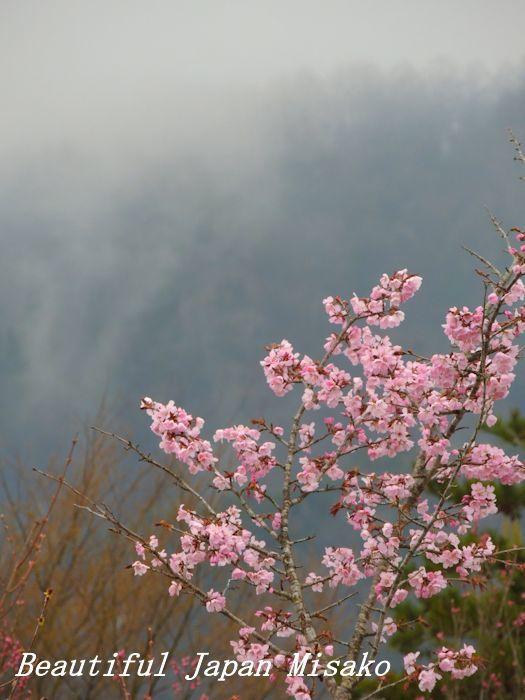 平成 最後の山桜・゚☆、・:`☆・・゚・゚☆。。_c0067206_20575009.jpg