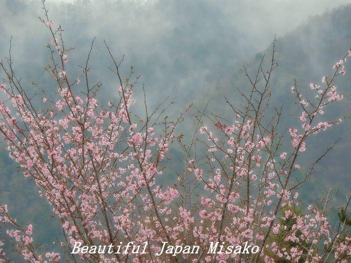 平成 最後の山桜・゚☆、・:`☆・・゚・゚☆。。_c0067206_20575396.jpg