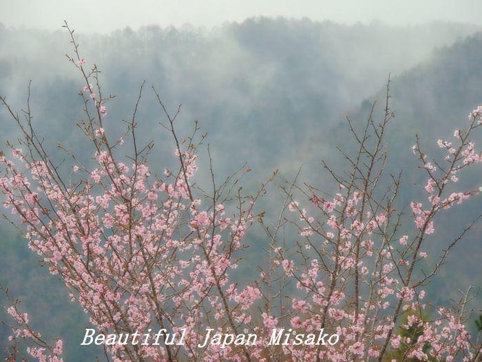 平成 最後の山桜・゚☆、・:`☆・・゚・゚☆。。_c0067206_20575560.jpg