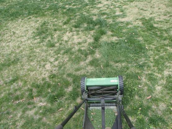 今年初めての芝刈り_f0064906_19540307.jpg
