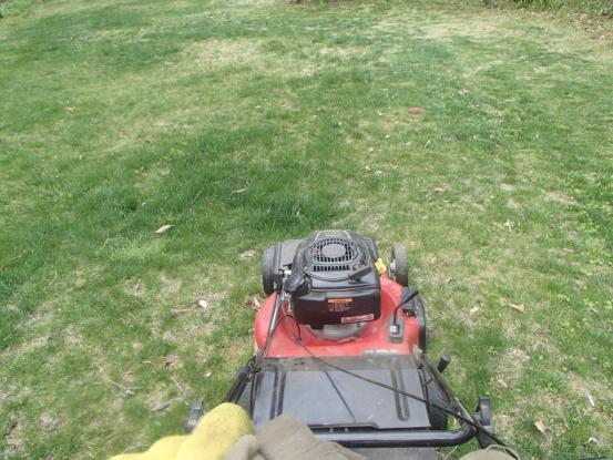 今年初めての芝刈り_f0064906_19540601.jpg