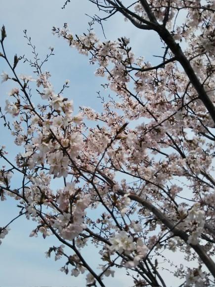 桜と庭花と、でんでん。。。_f0316507_18585348.jpg